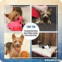 Adopt A Pet :: Tiny Tim - Troy, MI
