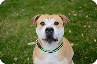 Pit Bull Terrier Mix Dog for adoption in Salt Lake City, Utah - Earthquake