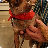 Adopt A Pet :: Myron - Johnson City, TN