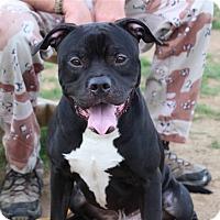 Adopt A Pet :: Hoss - Elyria, OH