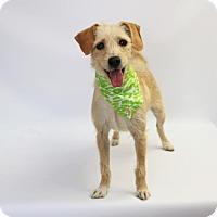 Adopt A Pet :: Blossom - Yucaipa, CA