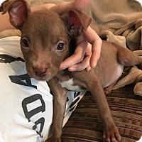 Adopt A Pet :: Finn - Fort Collins, CO