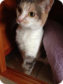 Calico Cat for adoption in Byron Center, Michigan - Miranda