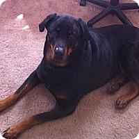 Adopt A Pet :: Nala - Brewster, NY