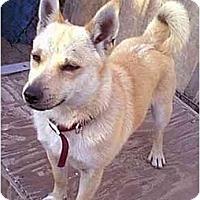Adopt A Pet :: Jiminy Cricket - dewey, AZ