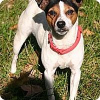 Adopt A Pet :: Tillie - Carmel, IN