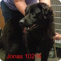 Adopt A Pet :: Jonas - Greencastle, NC