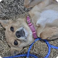 Adopt A Pet :: Carey - Meridian, ID