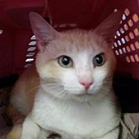 Adopt A Pet :: Sweet Sid - Ocala, FL