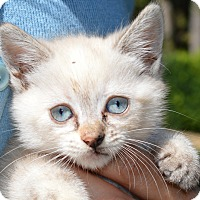 Adopt A Pet :: Chloe - Stanford, CA