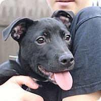 Adopt A Pet :: Natalie - Sparta, NJ