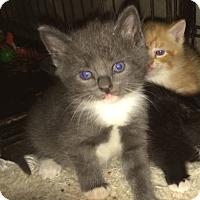 Adopt A Pet :: Prissy - Cocoa, FL