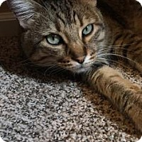 Adopt A Pet :: Akket - Fort Collins, CO