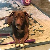 Adopt A Pet :: Kiya - Denver, NC