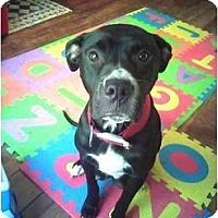 Adopt A Pet :: Suzie - Dayton, OH