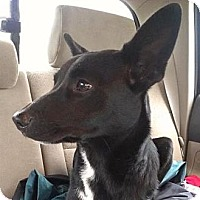 Adopt A Pet :: Merry - Modesto, CA