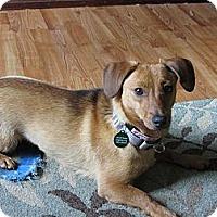Adopt A Pet :: Charlotte - Hastings, NY