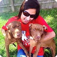 Adopt A Pet :: Jemma - Houston, TX