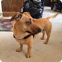 Adopt A Pet :: CHA CHA - Oakland, CA