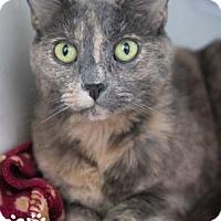 Adopt A Pet :: Trina - Merrifield, VA