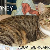 Adopt A Pet :: Sydney - Holden, MO