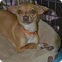 Adopt A Pet :: McFly - Meridian, ID