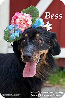 Retriever (Unknown Type)/Spaniel (Unknown Type) Mix Dog for adoption in Houston, Texas - Bess