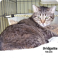 Adopt A Pet :: Bridgette - Oklahoma City, OK