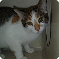Adopt A Pet :: Marbel - Hamburg, NY
