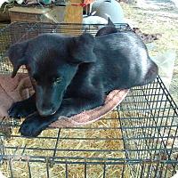 Adopt A Pet :: Jasper-pending adoption - Manchester, CT