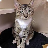 Adopt A Pet :: Lucy Diamonds - Newark, DE
