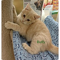 Adopt A Pet :: Buffy - Warren, OH
