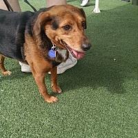 Adopt A Pet :: Heidi Pulaski - Waldorf, MD