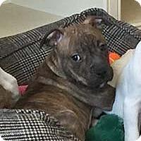 Adopt A Pet :: Katy's Pup Frank/jax - Chantilly, VA