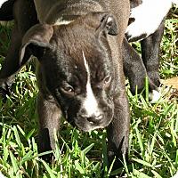 Adopt A Pet :: Mae Jemison - Jacksonville, FL