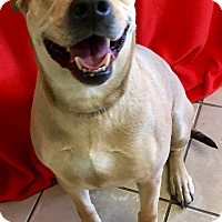 Adopt A Pet :: Wasabi - Phoenix, AZ