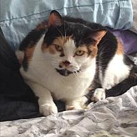 Adopt A Pet :: Mistress Mia - Toronto, ON