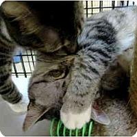 Adopt A Pet :: Nanette & Sigrid - Deerfield Beach, FL