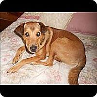 Adopt A Pet :: Kentucky - Oak Creek, WI