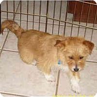 Adopt A Pet :: Mr. Scruffy - Scottsdale, AZ