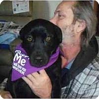 Adopt A Pet :: Jake - Cincinnati, OH