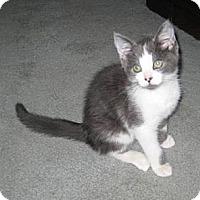 Adopt A Pet :: Sweet Boy - Kirkwood, DE