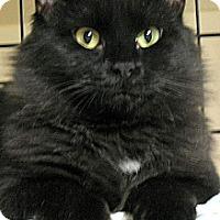 Adopt A Pet :: Rissa - Plainville, MA