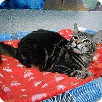 Adopt A Pet :: Beamer - Newport Beach, CA