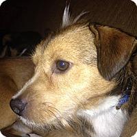 Adopt A Pet :: Oscar - Bardonia, NY