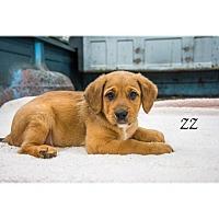 Adopt A Pet :: ZZ - West Hartford, CT