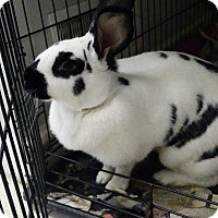 Adopt A Pet :: KATIE - Fall River, MA