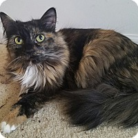 Adopt A Pet :: Medusa - Addison, IL