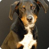 Adopt A Pet :: Rigid - Newland, NC