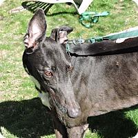 Adopt A Pet :: Rue - Canadensis, PA